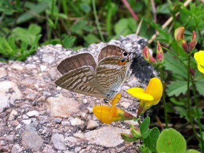 Yucatan+Flora+Fauna | Los pueblos que se asientan en los Picos de Europa mantienen un ...