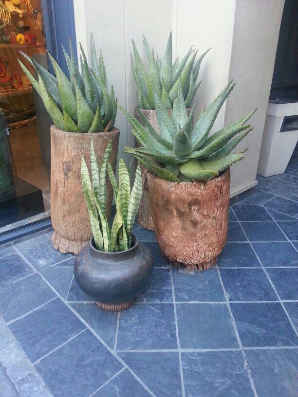 outdoor plants..