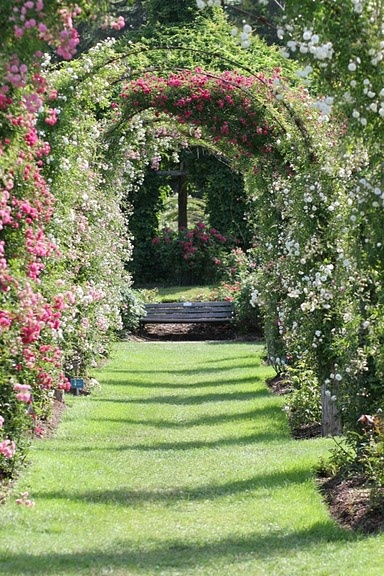 """""""Elizabeth Park Rose Garden"""" *Hartford and West Hartford, Connecticut*  