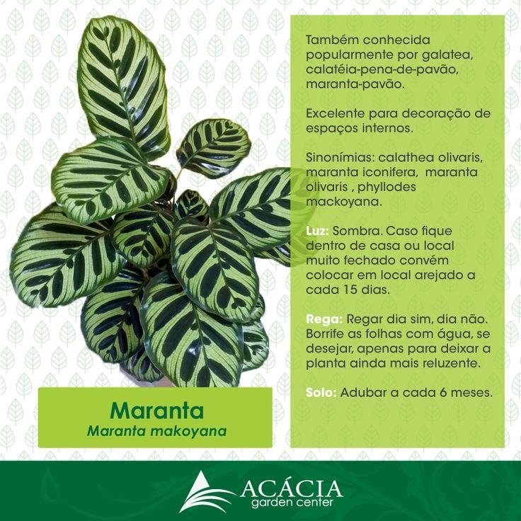 1000 images about plantas de sombra e interiores jardim de inverno shade and houseplants - Plantas interiores ...