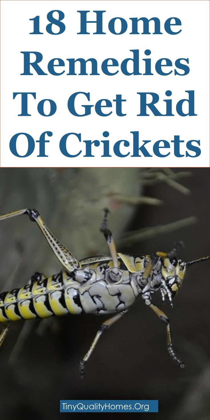 how to get rid of black crickets in basement