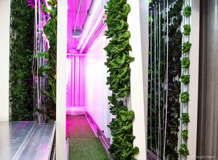 This innovative hydroponic system for sale uses a shipping container and Freight Farms; vertical farming technology for indoor hydroponic farming.