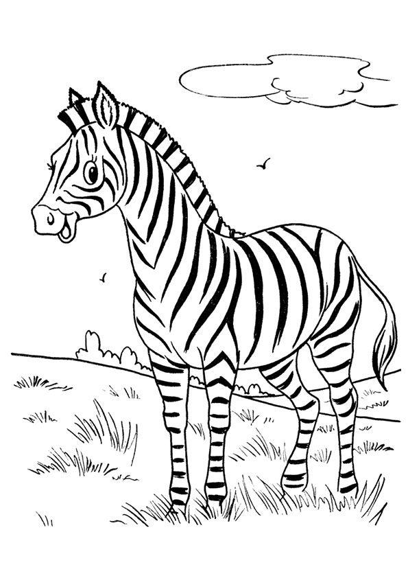 Zebra Para Colorir 6 Em 2020 Desenho De Zebra Paginas Para