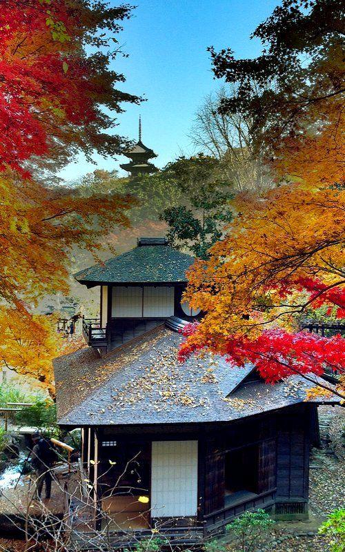 Autumn in Sankeien Park, Yokohama, Japan金秋三溪園,日本橫濱