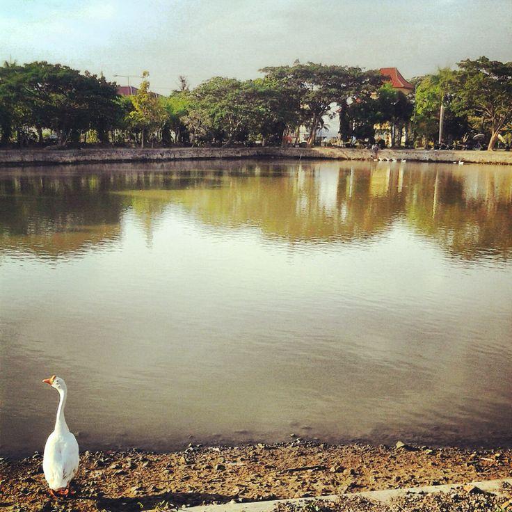 Danau Rektorat Universitas Airlangga in Surabaya, Jawa Timur