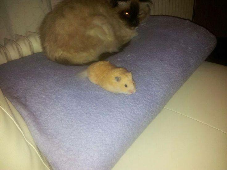 Zelf heb ik 2 hamsters genaamd Guus en Jordi, eentje heb ik voor mijn verjaardag gekregen van vrienden. (Foto van Jordi)