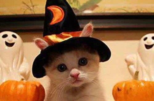 25 Ide Terbaik Tentang Gambar Kucing Lucu Di Pinterest