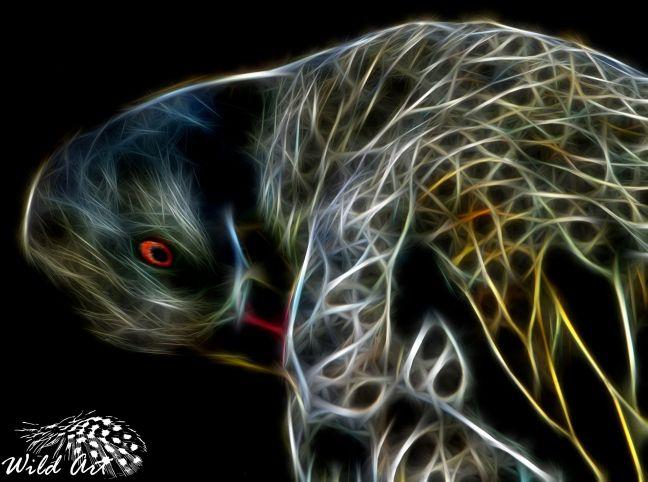 Cape Teal - Wild Art | Wild Art
