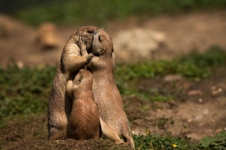 we are a family by Wolfgang von Vietinghoff on 500px