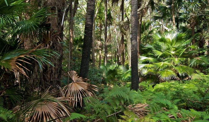 Munmorah State Conservation Area - ferns and palms in a rainforest