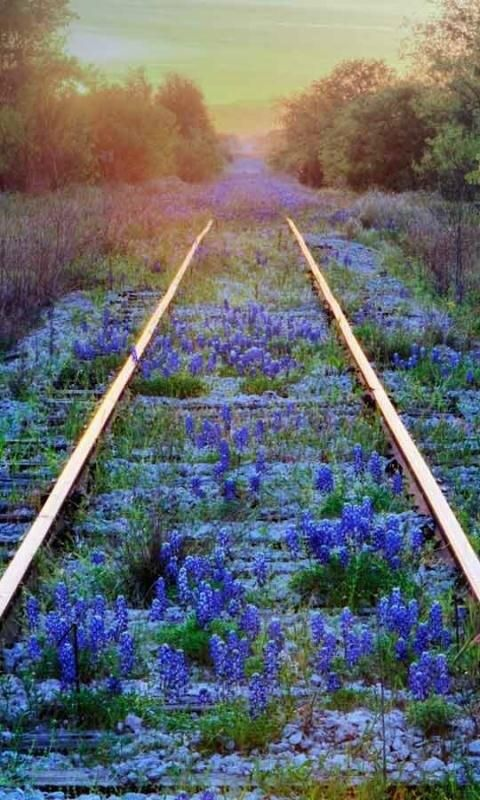 #abandoned railroad tracks gently being taken back by nature... beautiful