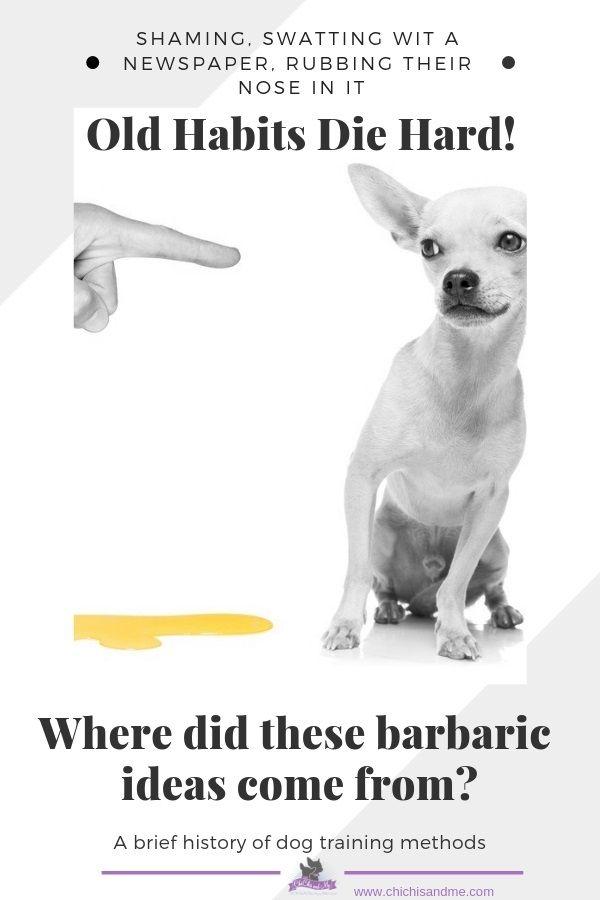 Title A Brief History Of Dog Training Dog Training Dog