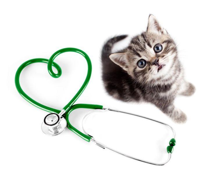 """∑:) Toda la información de la """"leucemia felina"""""""