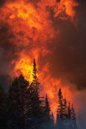 Great Wildland Firefighting Photos by Kari Greer