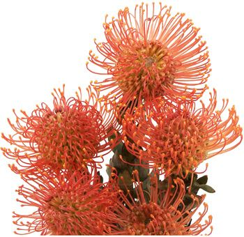 large swath of flowers spiky protea arrangement - Google Search