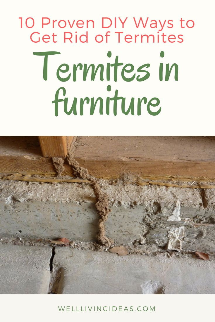 how to get rid of termites naturally youtube