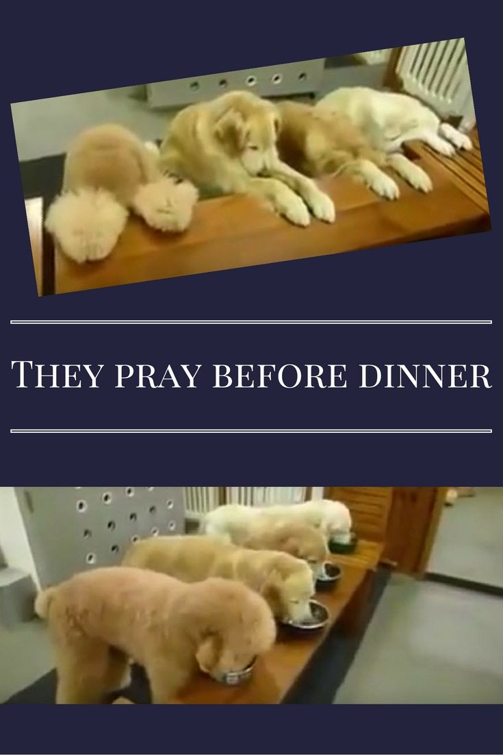 For her 4 well behaved dogs and then they say a prayer before they eat