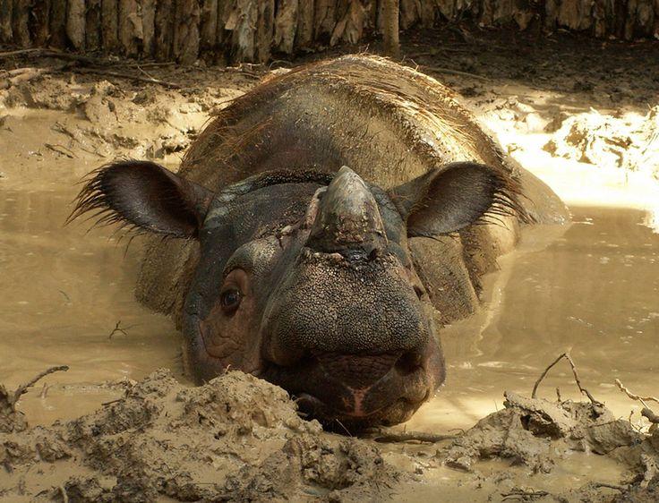 Save the Rhino (@savetherhino) | Twitter