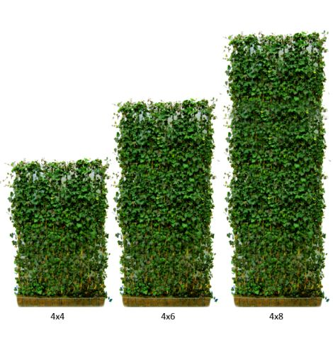 Green Living Fences -Green Living Fence light weight ivy panels are the perfect solution for adding greenspace to your backyards, decks and patios! They are also available in attractive planters for easy above ground use. Condo and Townhomes owners can add both privacy and greenery to patios and terraces with minimal upkeep - Carson Arthur - Cityline