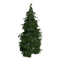 13 besten Marldon Christmas Tree Farm 2015 Bilder auf Pinterest ...