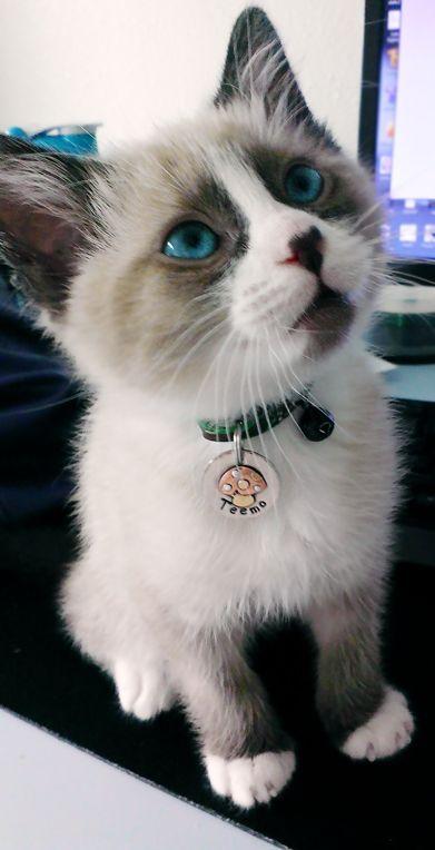 Meet Teemo! - Imgur