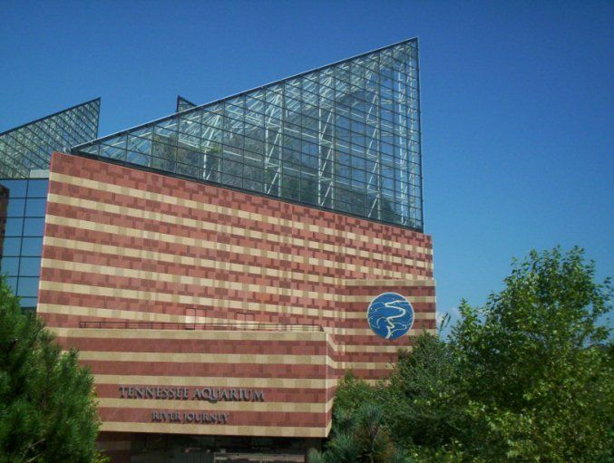 Tennessee Aquarium Chattanooga Tn Places I 39 Ve Been