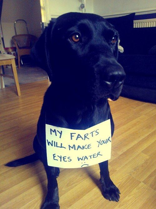 My farts will make your eyes water | Dog Shaming | Looks ...