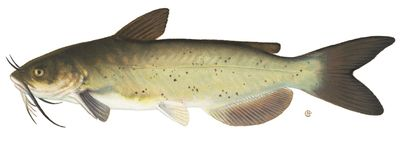 good tips for catching catfish
