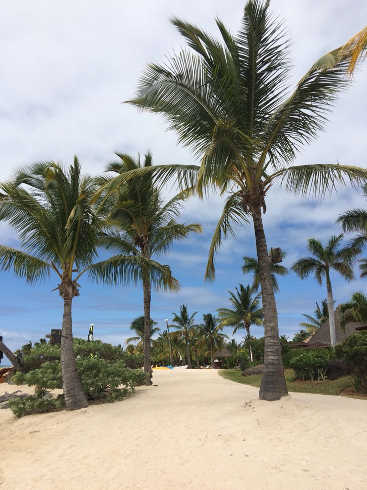 Lovely Mauritius Palm Trees My Trip To Mauritius In