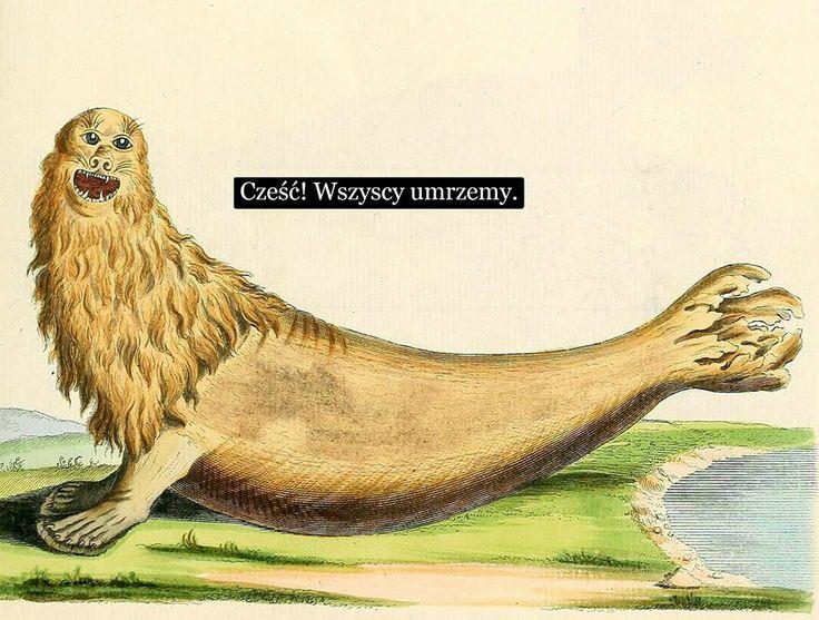 Sztuczne Fiołki: Johann Christian Daniel von Schreber (1739-1810) – niemiecki badacz historii naturalnej i zoolog. | źródło obrazka: Stare obrazki ze zwierzętami.