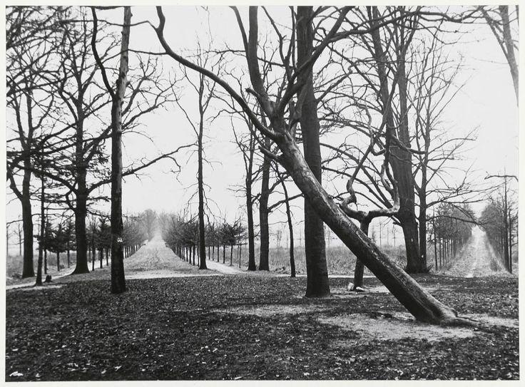 De Speelhuislaan in 1929, gezien vanaf de plaats van het vm. Speelhuis. Duidelijk is te zien dat het Speelhuis in een ster van dreven stond. De Belcrum is nog niet bebouwd. (Beeldcollectie Stadsarchief Breda)