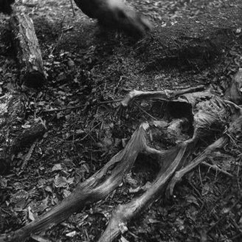 Here's something macabre for you: In the east Tennessee woods lie dozens of corpses in various states of burial and decay. Welcome to The Body Farm.
