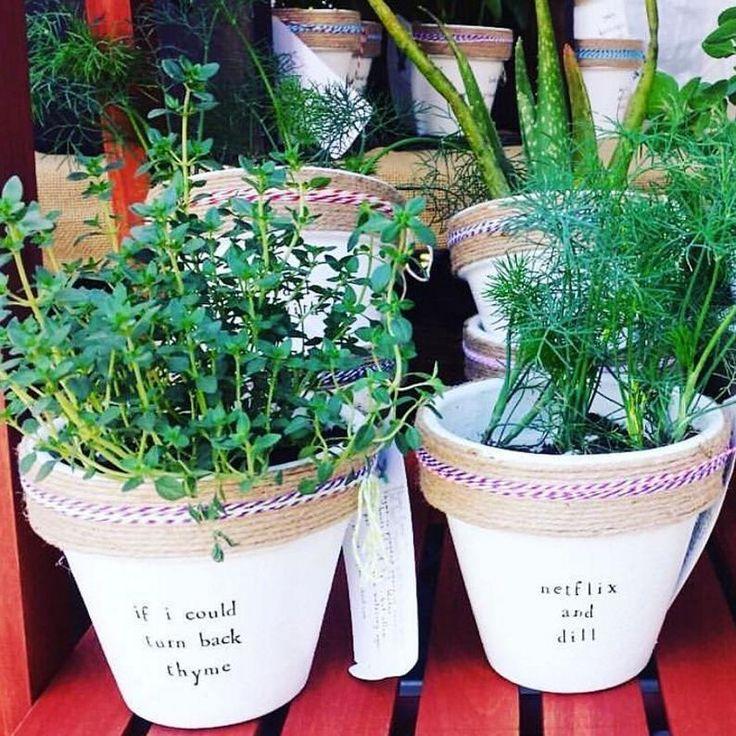 19 best Succulent Sayings images on Pinterest | Succulents ...