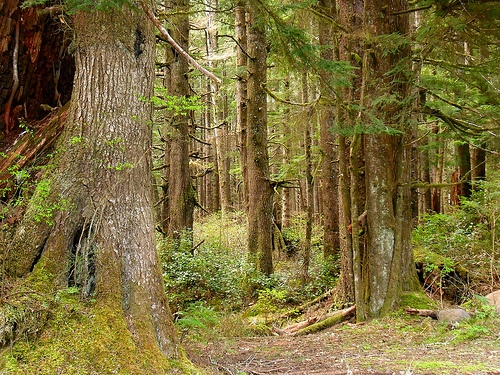 The Olympic Forest near Forks, WA by KellyManningPhotography, via Flickr