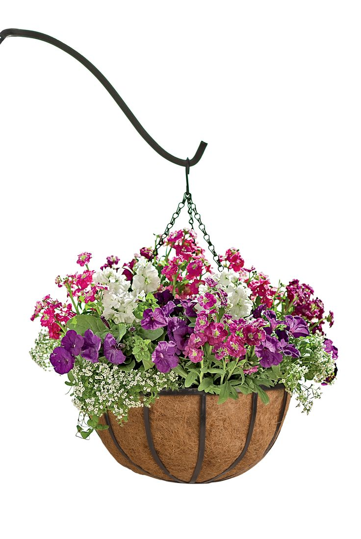 Best 25 hanging flower baskets ideas on pinterest for How to hang flowers