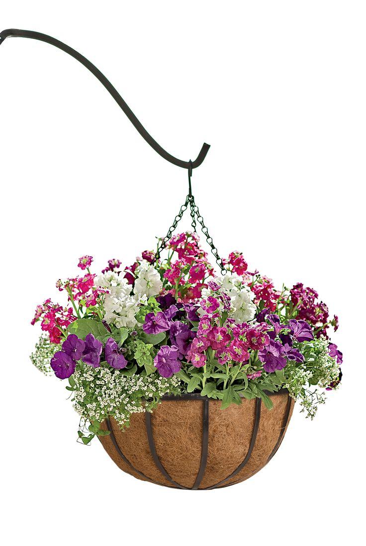 17 best images about outside hanging baskets and flower pots on pinterest gardens hanging. Black Bedroom Furniture Sets. Home Design Ideas