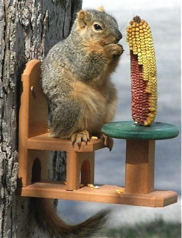 Durable Squirrel Feeder s guaranteed for life! A fun design in new recycled plastic, this poly lumber squirrel feeder features a table and chair where squirrels can actually sit and eat corn from the