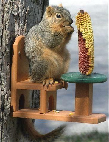 17 Best Images About Squirrel Feeder Diy On Pinterest