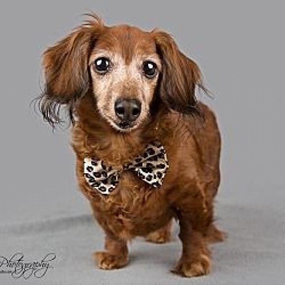 Petadoption Pet Adoption Shelter Dogs Pet Adoption Pet