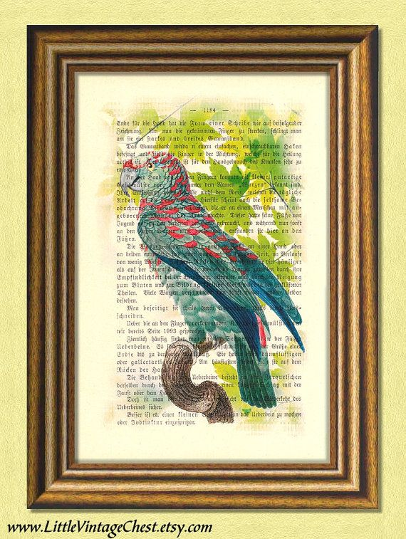 Black Friday! Buy 1 Get 2! - RED SPOTTED PARROT   Parakeet  Dictionary by littlevintagechest, $7.99
