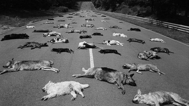 Petition · Stop domestic animals killed on roads · Change.org