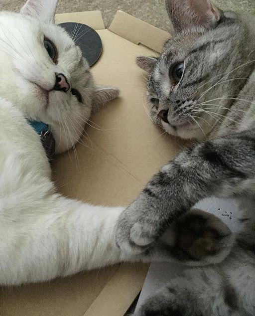 "via nala_cat @  nala_cat:""hold my paw like you never let it go"" ❤️www.nalacat.com"