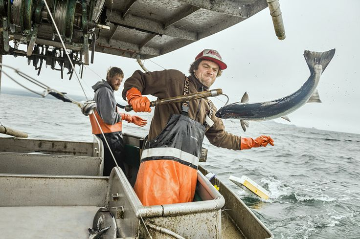 Salmon trolling in action. Courtesy of Alaska Seafood.
