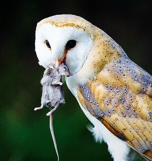 1000 Images About Observant Owls On Pinterest Long
