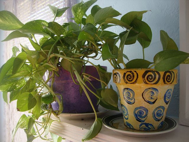 10 houseplants that ease stress purify your home and are impossible to kill houseplants are a truly delightful addition to any home