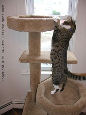 Best 25 cat tree plans ideas on pinterest cat tower for Build your own cat scratch tower