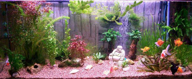 Les 25 meilleures id es de la cat gorie aquarium pour for Acheter poisson rouge botanic