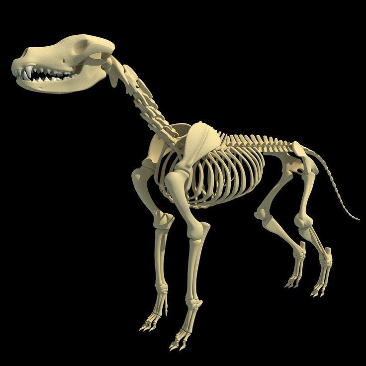 3d model cow skeleton horse animal