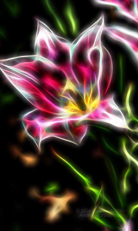 Indah wallpaper bunga tulip 480x800