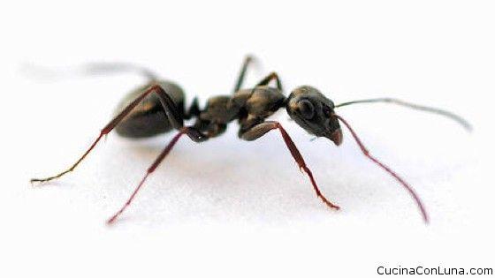 Rimedi naturali per allontanare le formiche